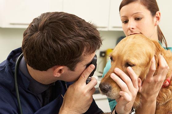 oftalmologia_veterinaria_microcirurgia_ocular