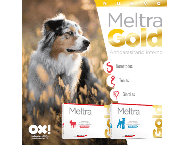 meltra gold
