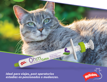 ohm gatos